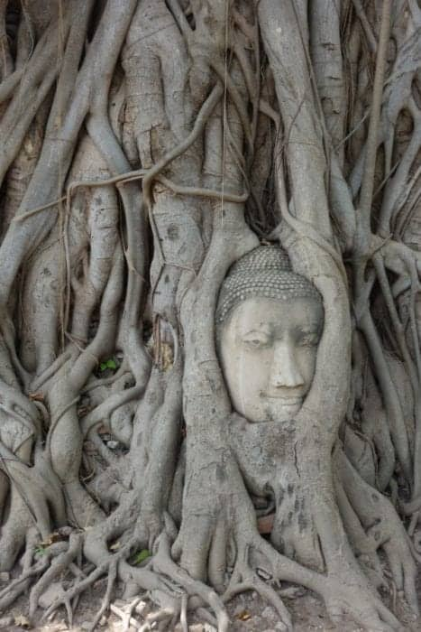 Ayutthaya: The lost world of ancient Thailand & a treasure trove of temple, bangkok, temples, face in tree, buddha in tree, angkor wat, bagan, Wat Mahathat, Wat Phra Si Sanphet, Wat Yai Chai Mongkhon, Wat Maheyong, Wat Chaiwatthanaram, Wat Phutthaisawan, Wat Phanan Choeng, temple entrance fee, rent a bike, cost of renting a bike in Ayutthaya, things to do in Ayutthaya, day trip, how to get to Ayutthaya from Bangkok, Chiang Mai, Best temples to visit in Ayutthaya, Ayutthaya historical park, Ayutthaya Thailand